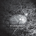 Cocoon-Download.jpg